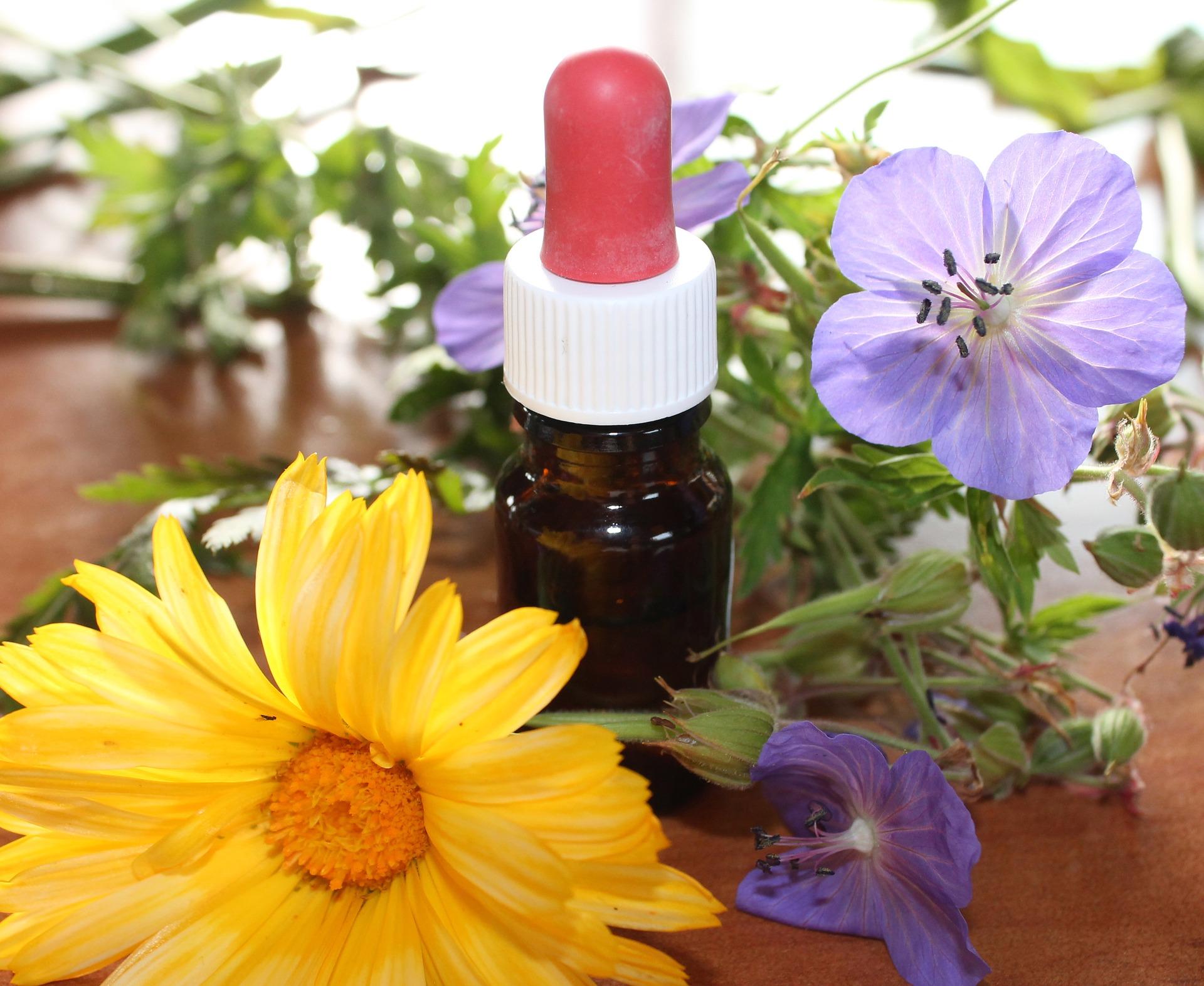 Transformer les Plantes Aromatiques et Médicinales (PAM)