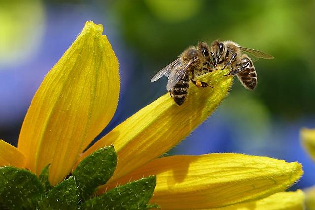 Conduire un rucher de (-) de 30 ruches