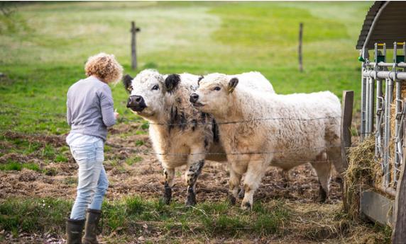 Utiliser une approche naturelle pour la gestion de la santé des animaux